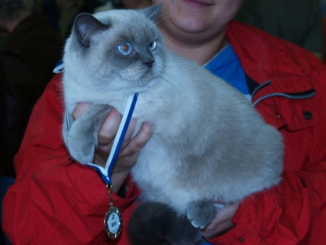 27.- 28.10.2007 - FIFe World Winner Cat Show Bratislava - CACE + BIV + nom.  BIS 7886bd641b6