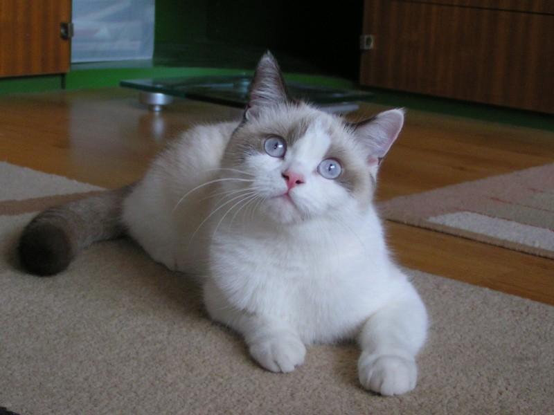 tesné tesné mačička pics pov dávať výstrek